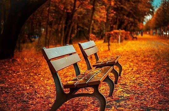 two benches in autumn in the park covered with orange red leaves