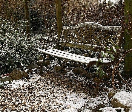 a bench snow covered in a wood