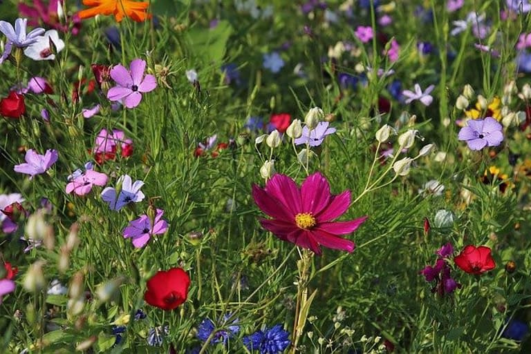 a wild flower field