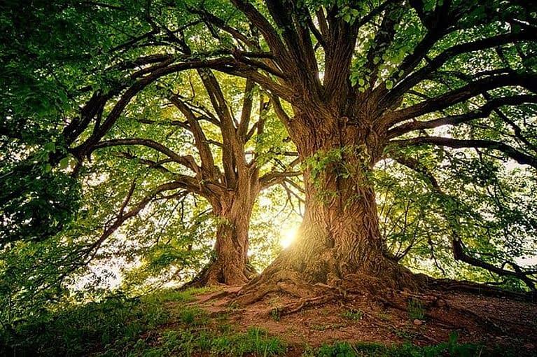 beautiful majestic trees in sunlight