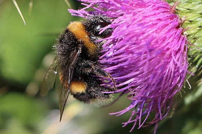 The Magic of Spring- Welcome Little Bumble Bee
