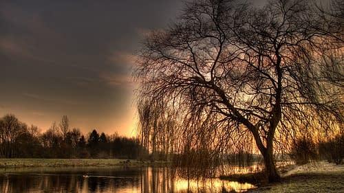 The Beauty of Light