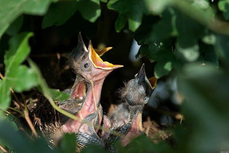 a bird feeding its kids