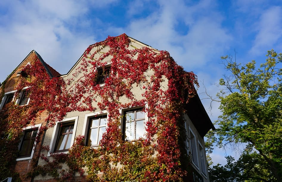 a house covered with red leaves