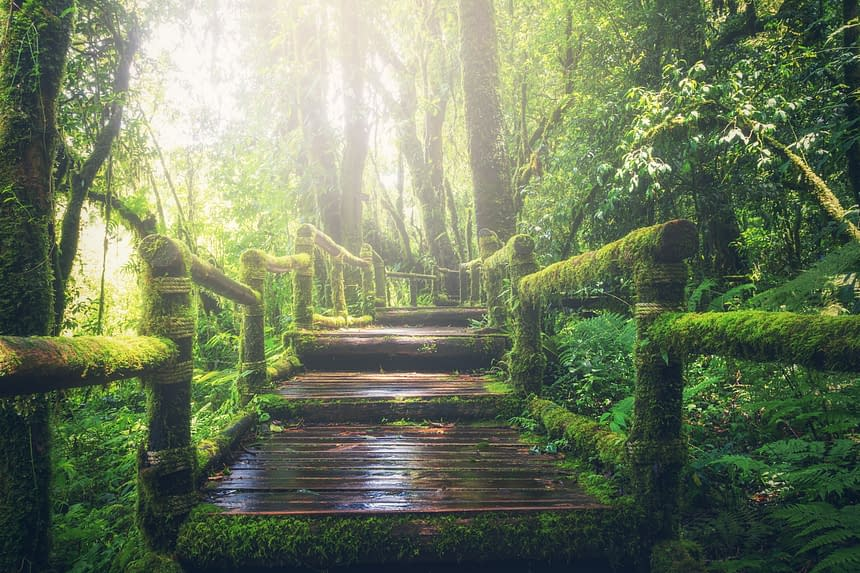 light on a bridge, covered with moss