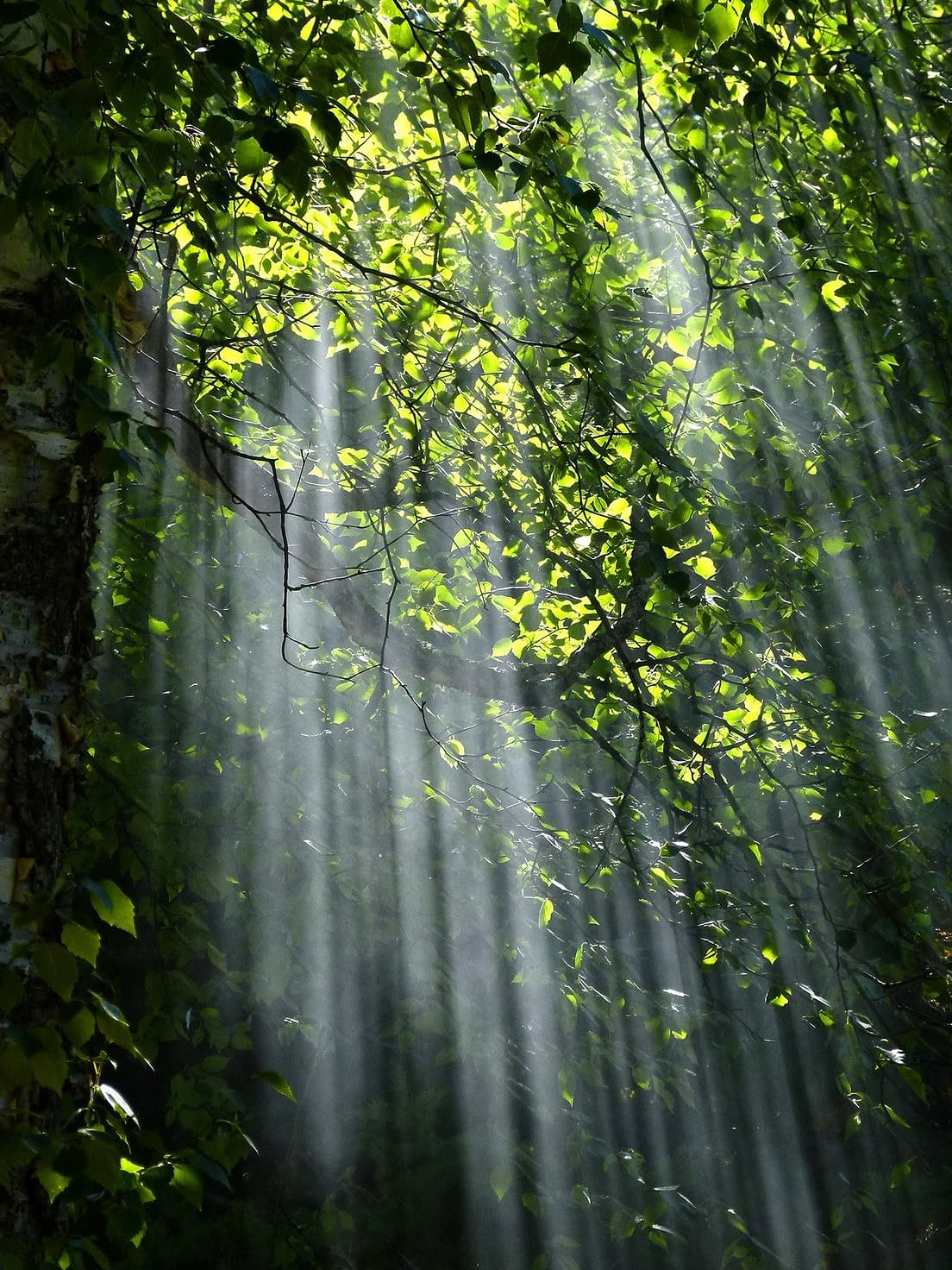 Light coming through leaves