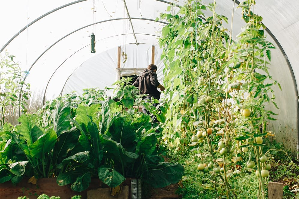 conservatory, vegetables