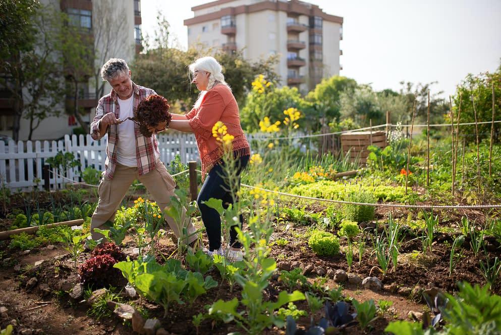 How to create a vegetable garden?
