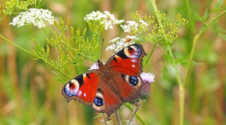 How to create a fairy garden for insects?