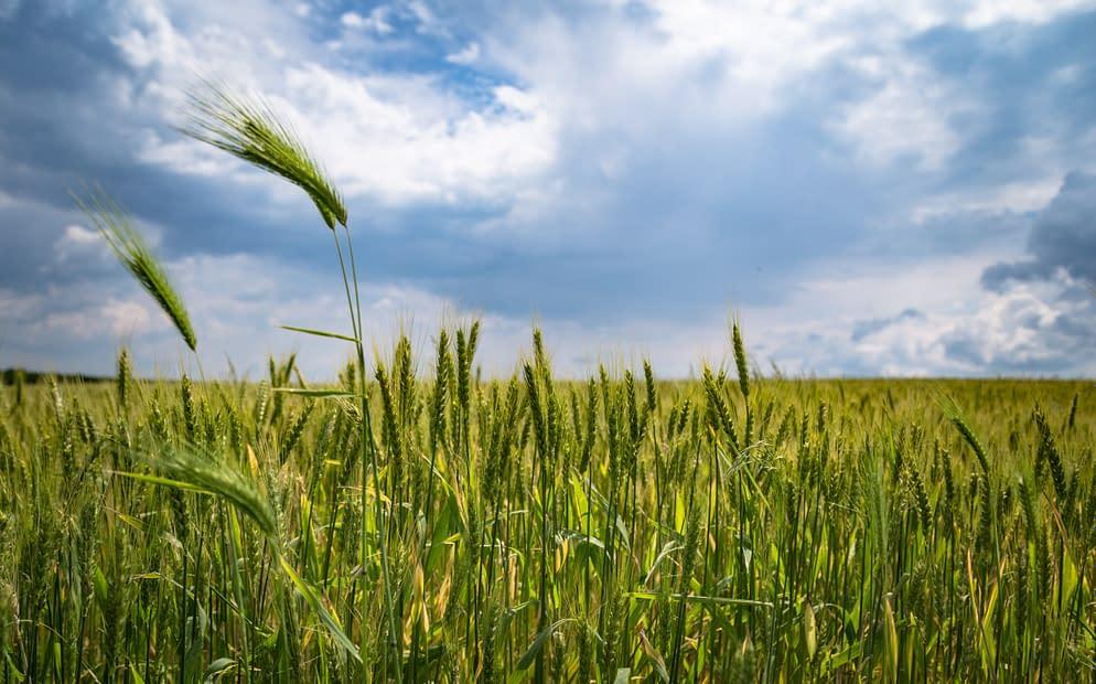 farming, a field