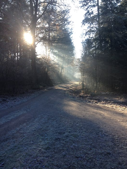 forest in winter, a frozen day