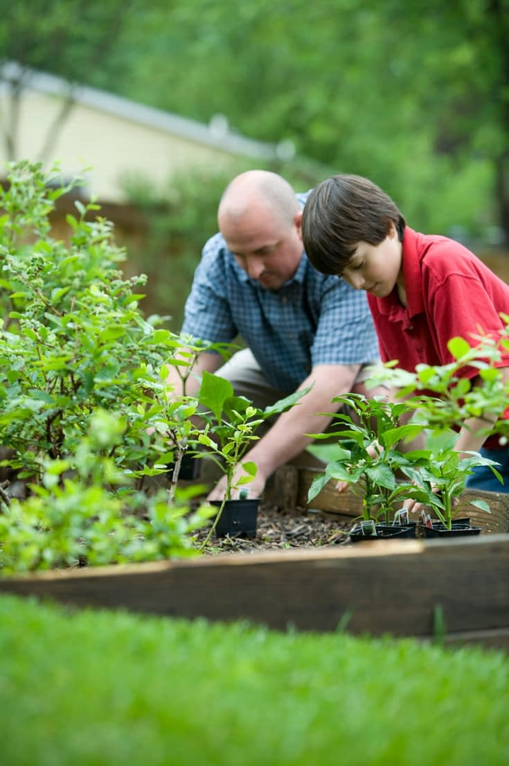 grandfather and grandson are planting vegetables