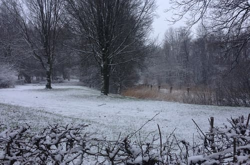 snowcovered field in the forest in Apeldoorn