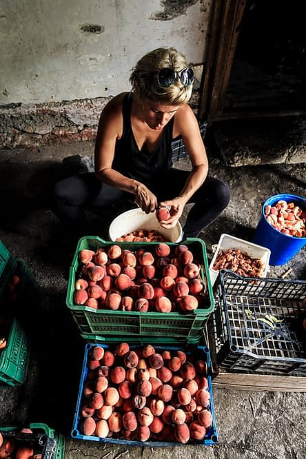 a woman sitting in front of two boxes with peaches, cutting a peach