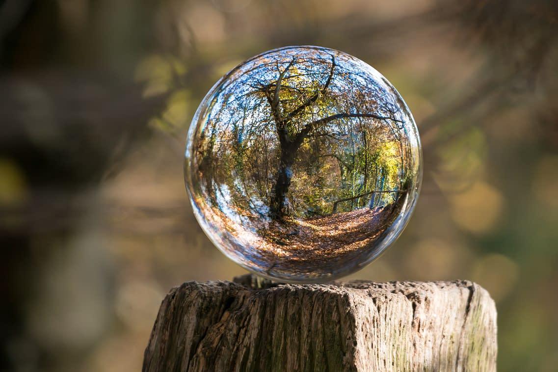 a tree shining through a glass ball