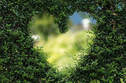 a heart in a hedge